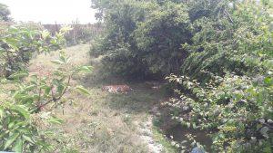 oaza tigra 5