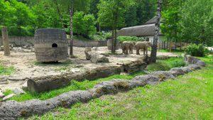 zoo-zlin-slon