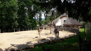 zoo-zlin-zirafa