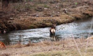 Keď lovia psy alebo čo nás stretlo cestou na Markušovský hríb