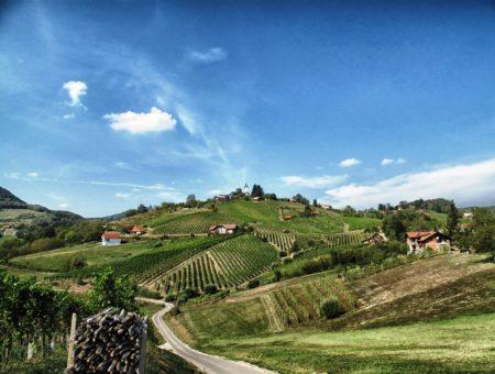 Bicyklom naprieč slovinskými vinicami