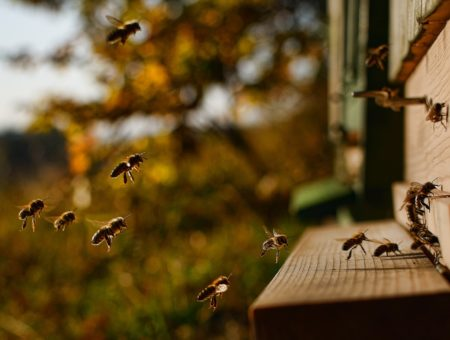 """Za včelami do Slovinska: 5 spôsobov ako sa stať """"apituristom"""""""